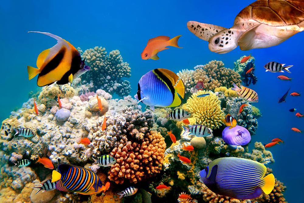 японский фотографии высокого качества подводный мир способны