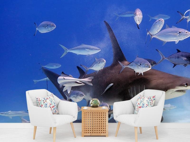 Фотообои с акулой для телефона